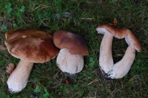 Грибной туризм в лесах Финляндии