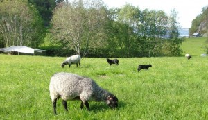 Сельское хозяйство Норвегии